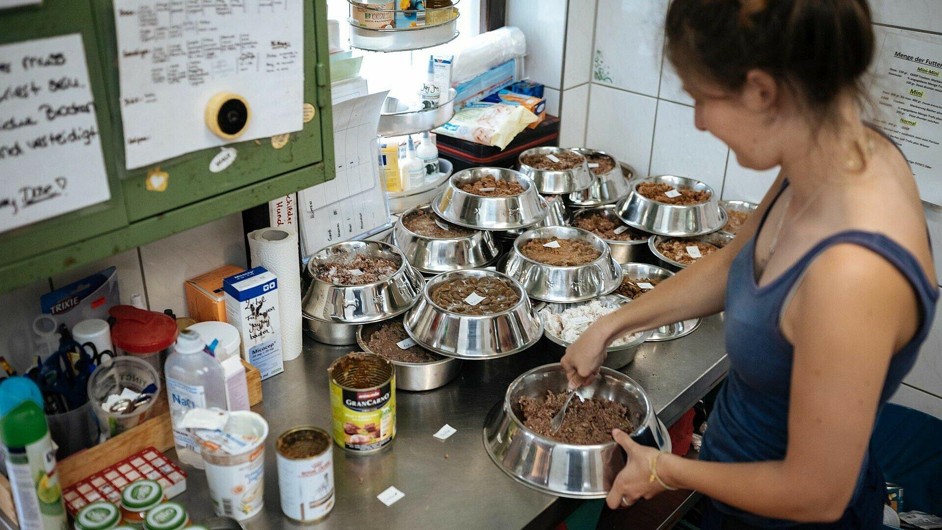 Ehrenamtliche Mitarbeiterin füllt Futter in Näpfe im Tierheim Zollstock