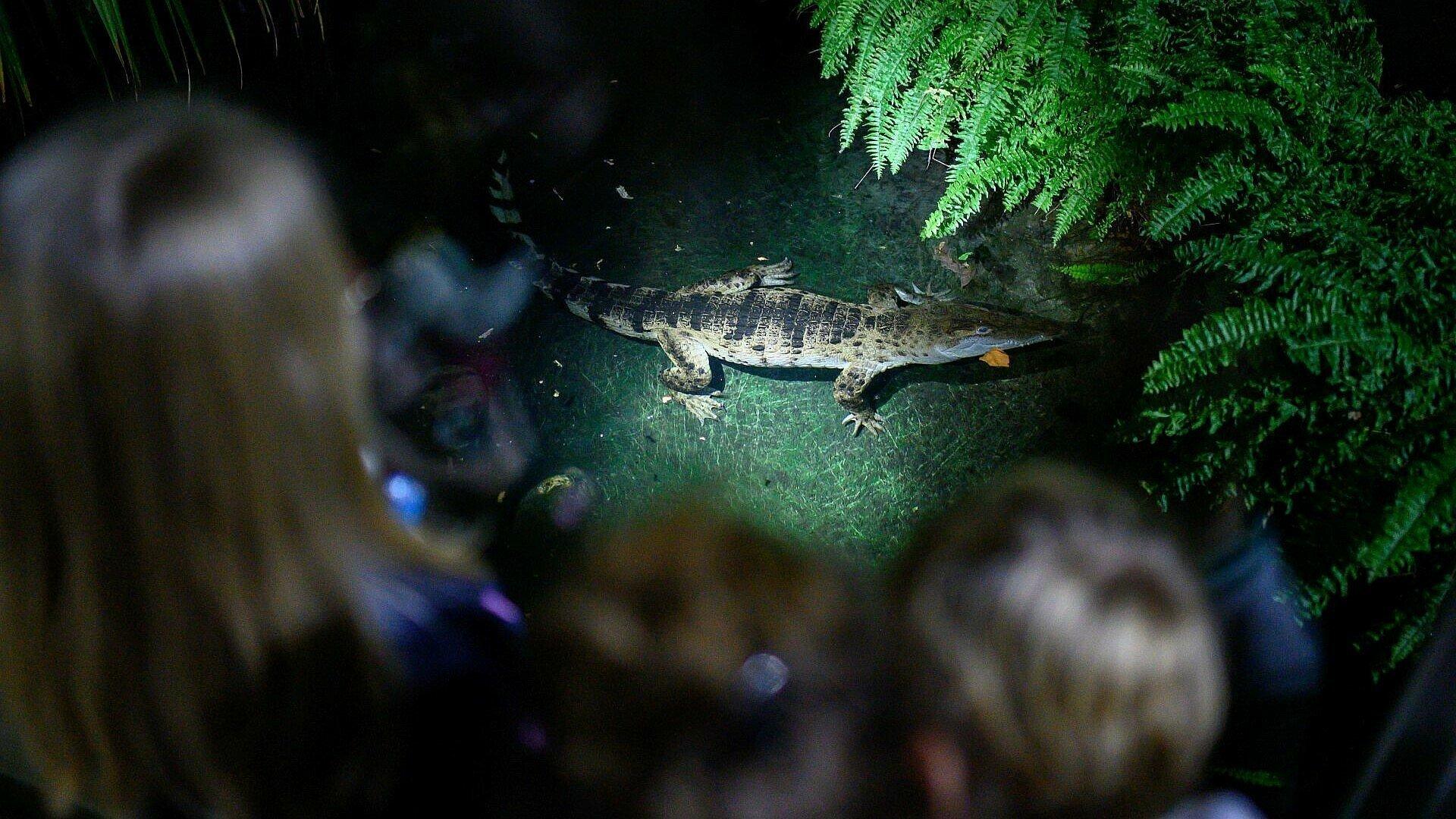 Kinder betrachten ein Krokodil bei der Taschenlampenführung im Kölner Zoo