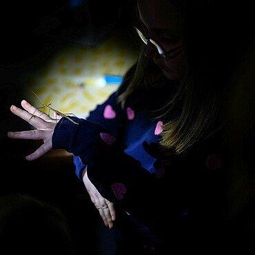 Insekt auf der Hand eines Kindes bei der Taschenlampenführung im Kölner Zoo