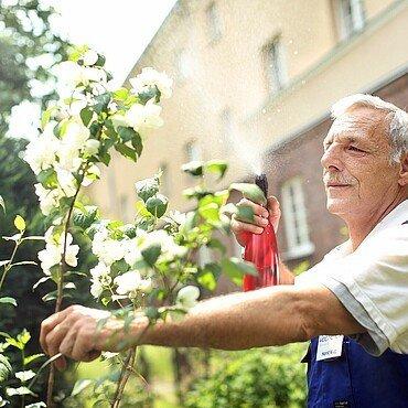Veedelhelfer Horst Klug pflegt die Pflanzen im Garten