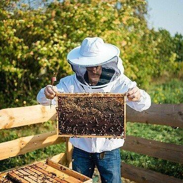 Imker Matthias Roth zeigt eine Brutraumwabde aus dem Bienenstock im Waldbadviertel