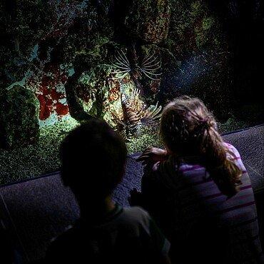 Kinder betrachten einen Fisch bei der Taschenlampenführung im Kölner Zoo