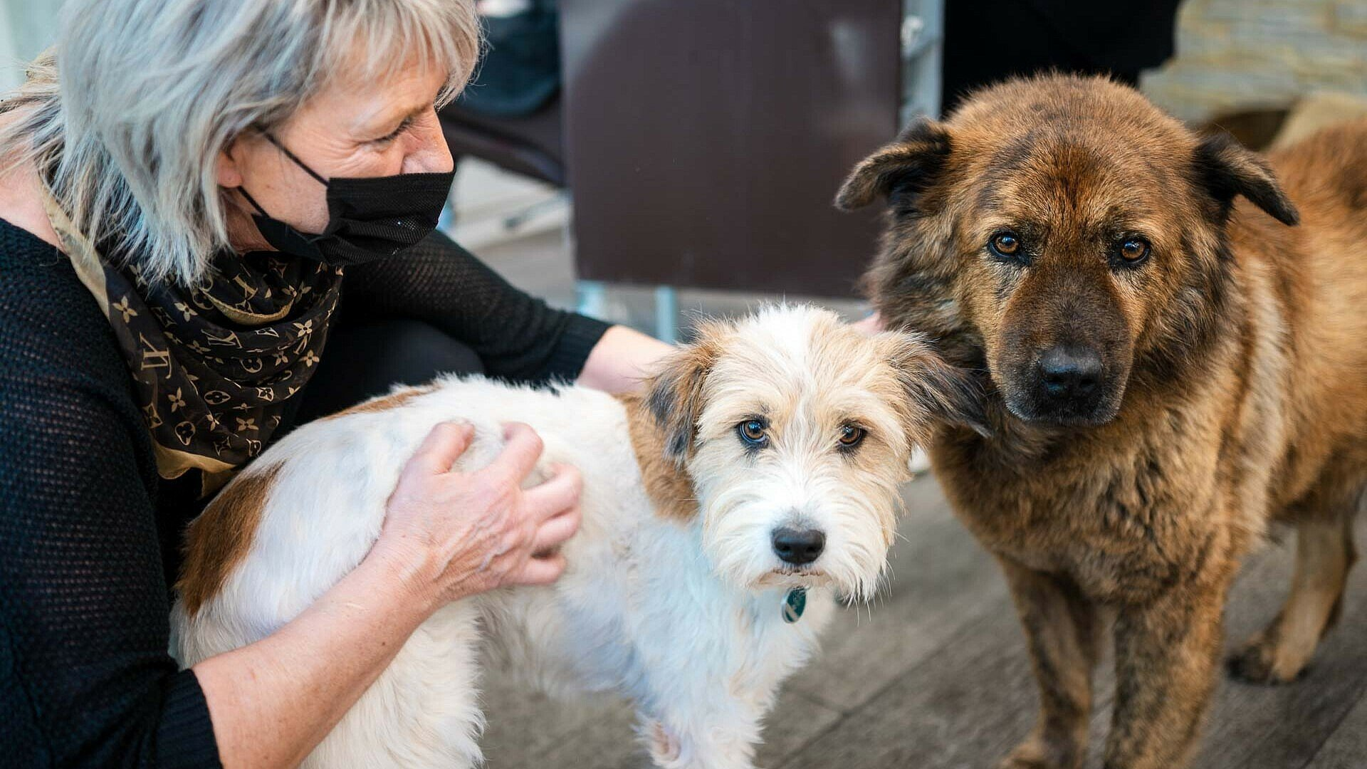 "Auch Hunde sind im Friseursalon ""Vivida Nuances"" in Bocklemünd willkommen"