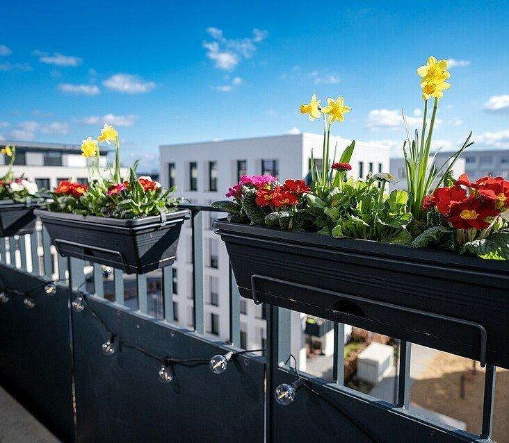 Frühlingsblumen auf einem Balkon in Köln