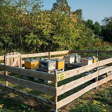 Neben dem Gemeinschaftsgarten stehen Bienenstöcke im Waldbadviertel in Ostheim