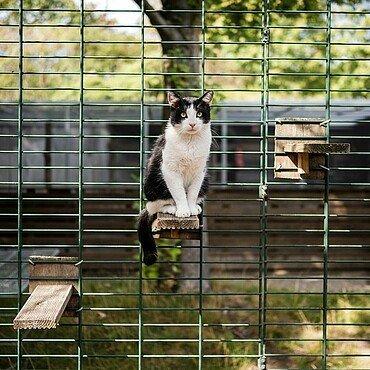 Kletternde Katze im Tierheim Zollstock