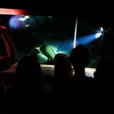 Kinder betrachten einen Fisch bei der Taschenlampenführung in Köln