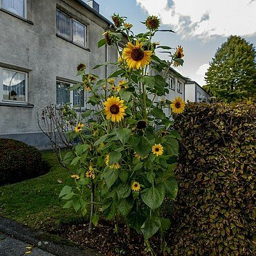 Leben und Wohnen im Kölner Veedel Mauenheim