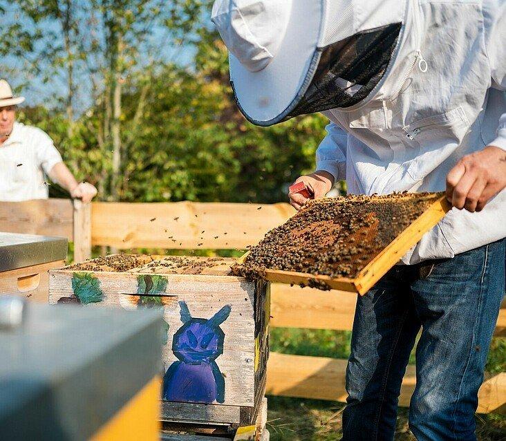 Imker Matthias Roth betrachtet eine Brutraumwabe aus dem Bienenstock im Waldbadviertel