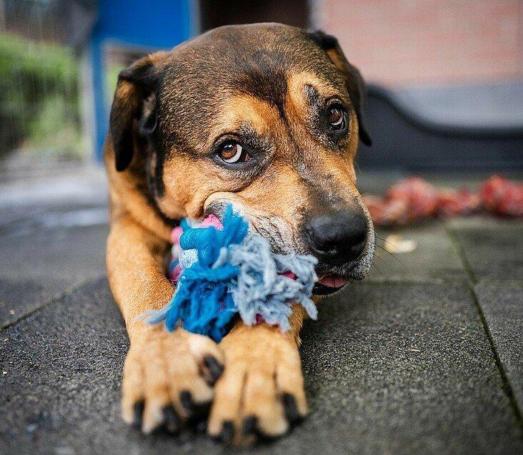 Spielender Hund im Tierheim Zollstock