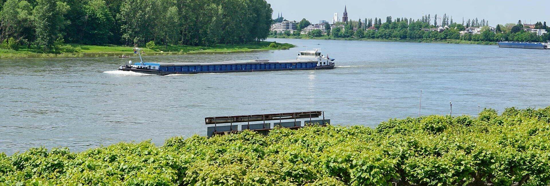 Sommerliches Rheinufer in Köln-Porz