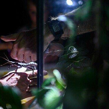 Insekt auf der Hand des Zoobegleiters bei der Taschenlampenführung im Kölner Zoo