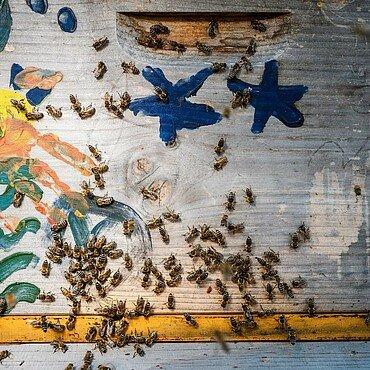 Die Ostheimer Bienen mögen ihren buntbemalten Bienenstock in Waldbadviertel