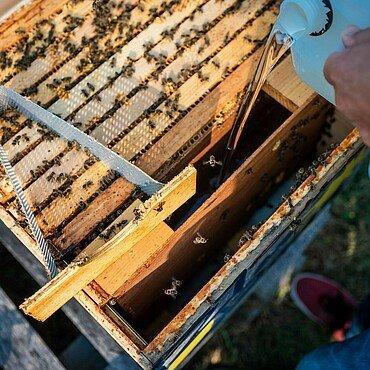 Aus einem Kanister wird Maissirup in den Bienenstock-Futterkasten im Waldbadviertel in Ostheim gefüllt