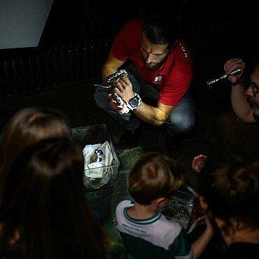 Zoobegleiter mit Python bei der Taschenlampenführung im Kölner Zoo